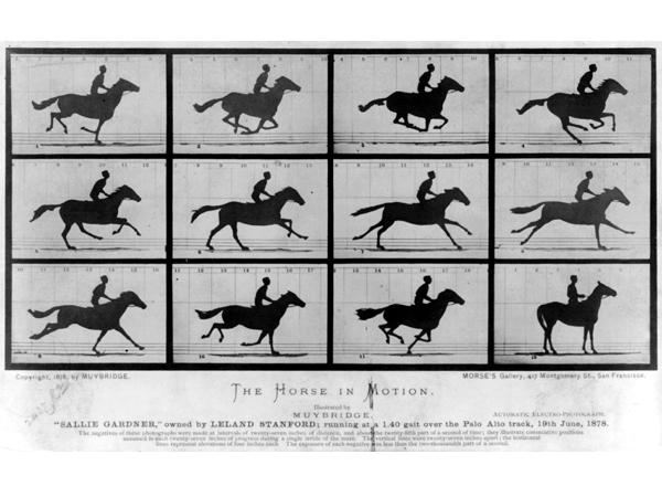caballo-en-movimiento