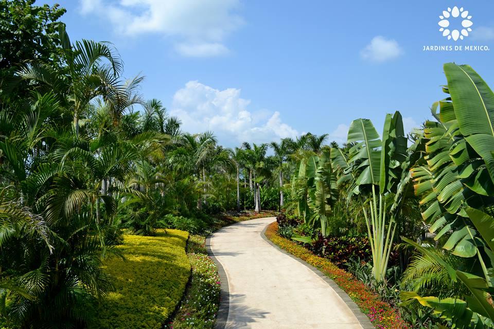 jardin_tropical_jdm