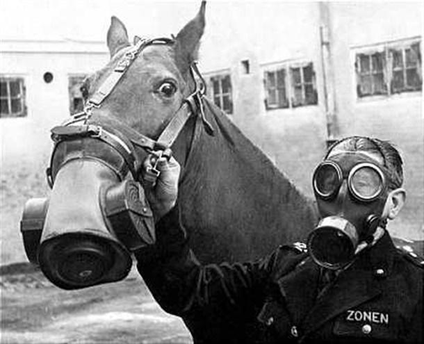 caballo milicia