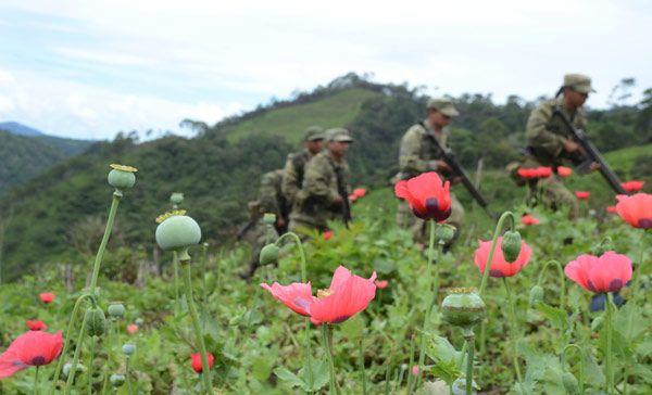 campo de opio