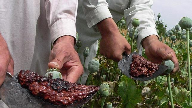 opio-afgano