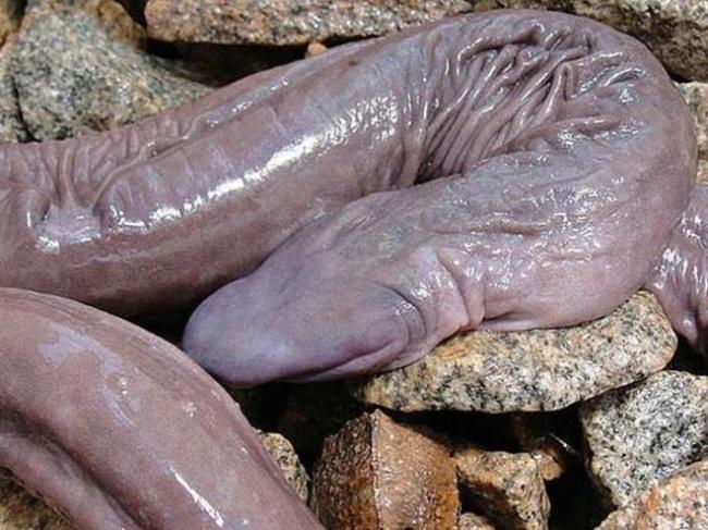serpiente pene2