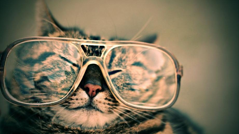 gatos3