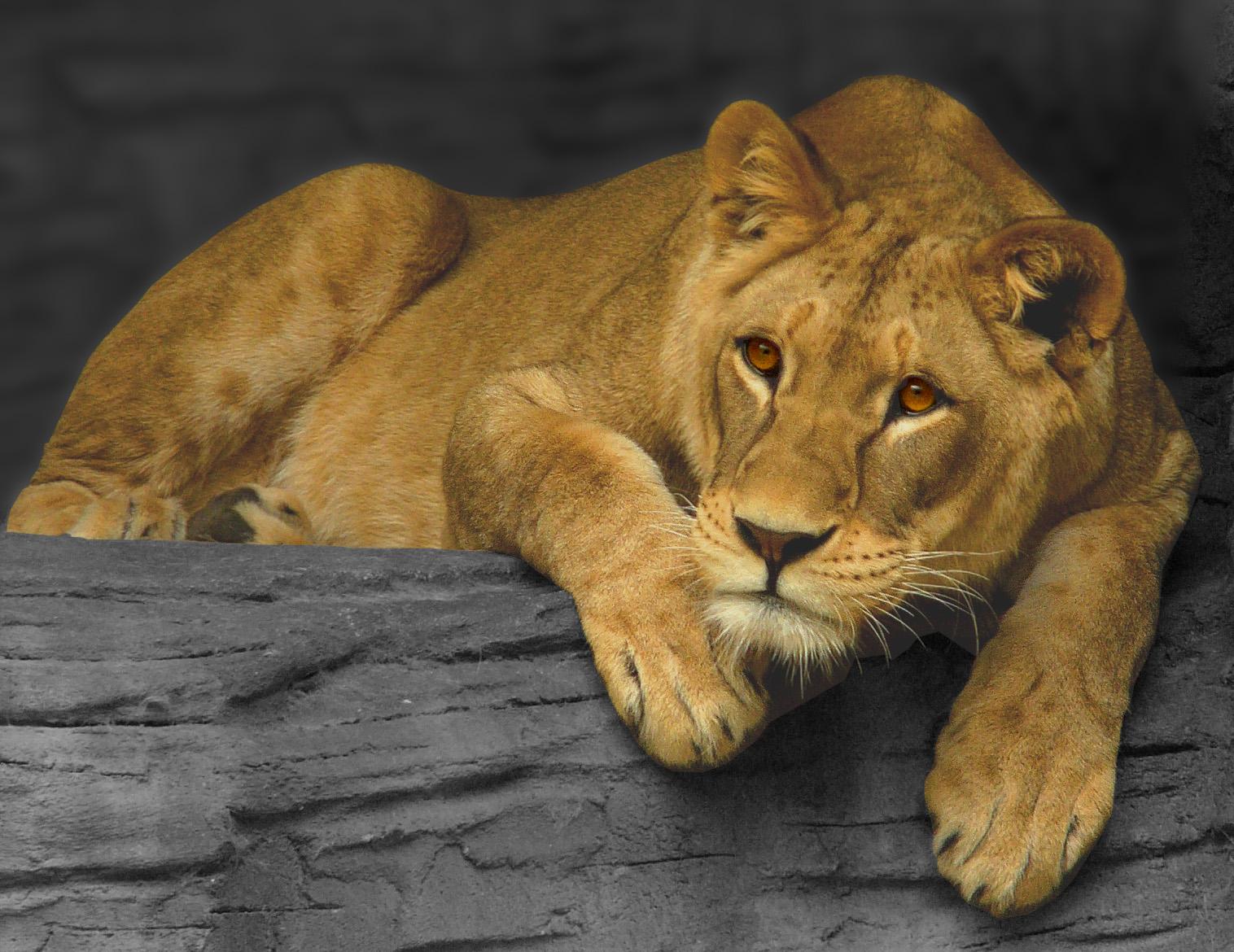 leona1