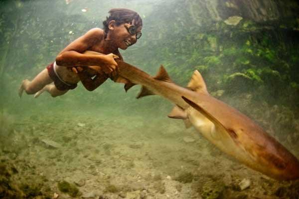 bajau-tiburon
