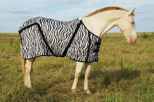 caballo manta cebra