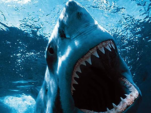 Documentales HD: Mirando de cerca a los predadores más temidos del reino animal