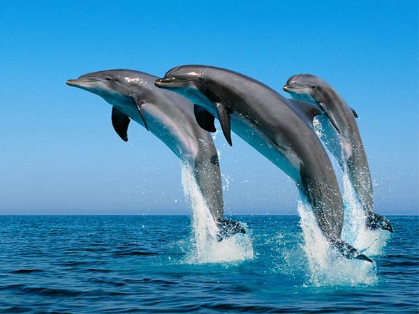 """Los delfines son considerados """"personas no-humanas"""""""