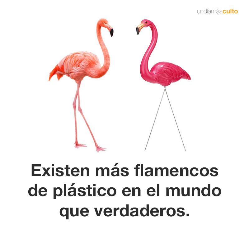 Flamencos de plástico