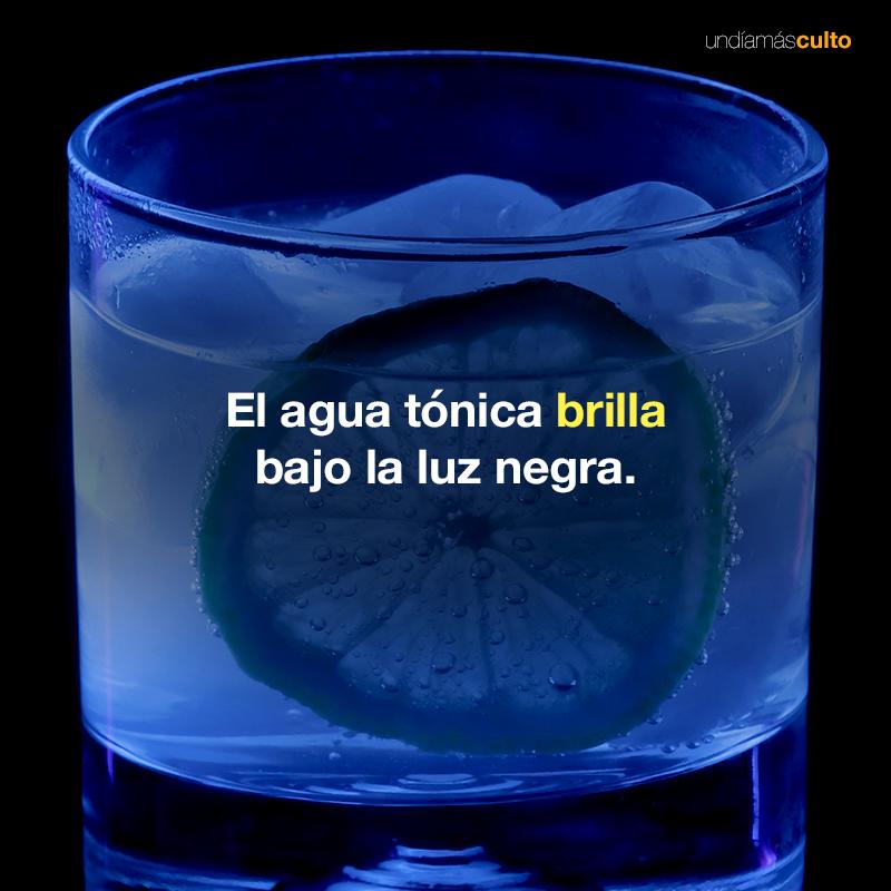 Agua tónica