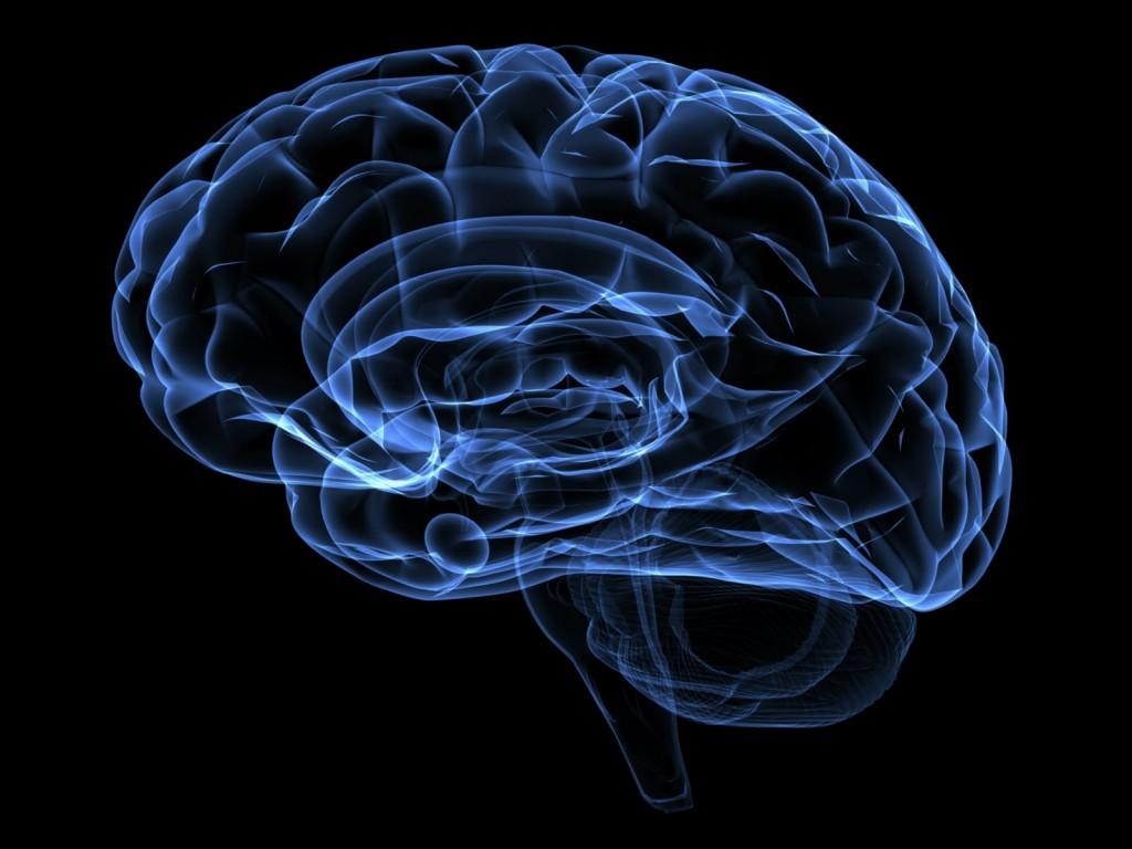 Los mitos acerca el cerebro