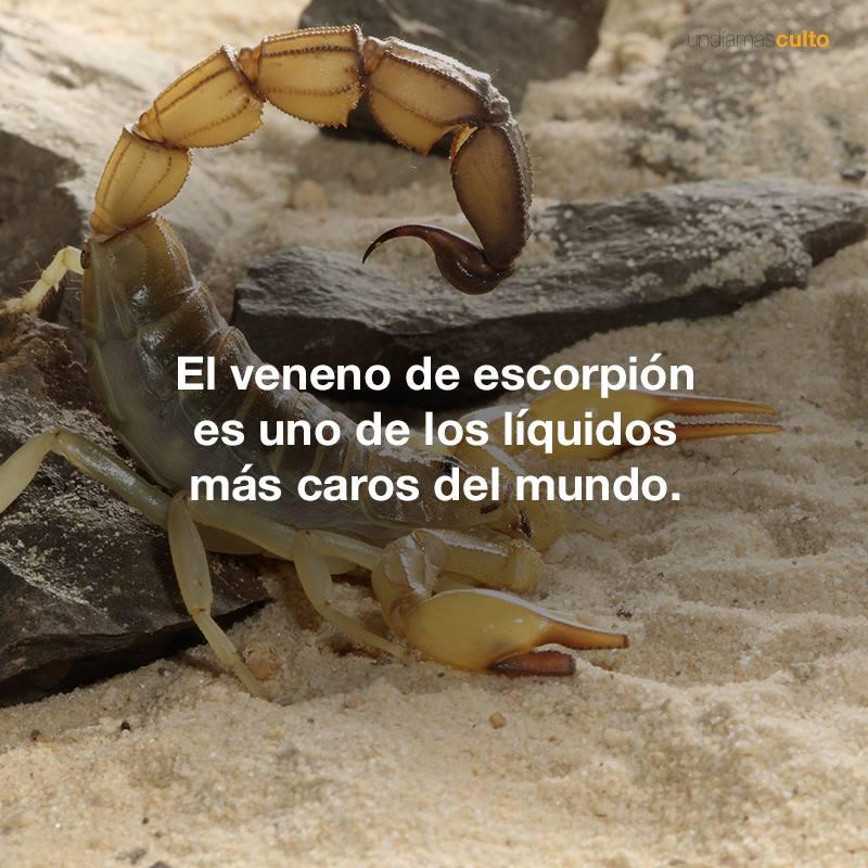 Veneno-escorpión