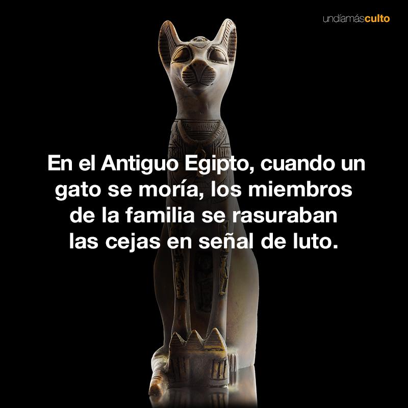 Luto-Egipto-gatos