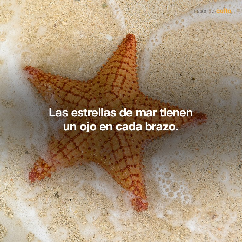 Ojos estrellas de mar