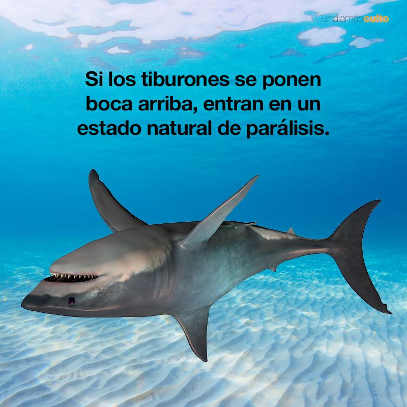 Tiburones parálisis