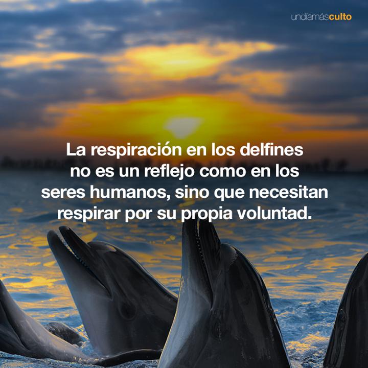 Respiración voluntaria en delfines