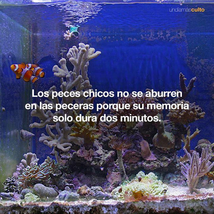 Memoria peces chicos