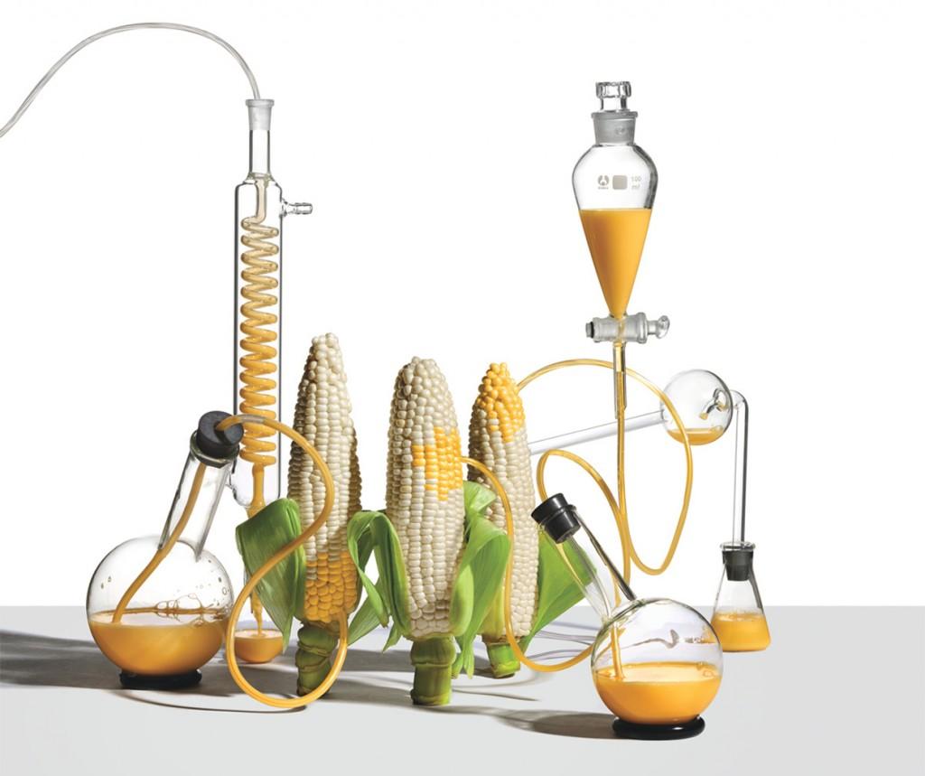 gmo-corn