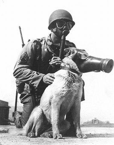 militar y perro