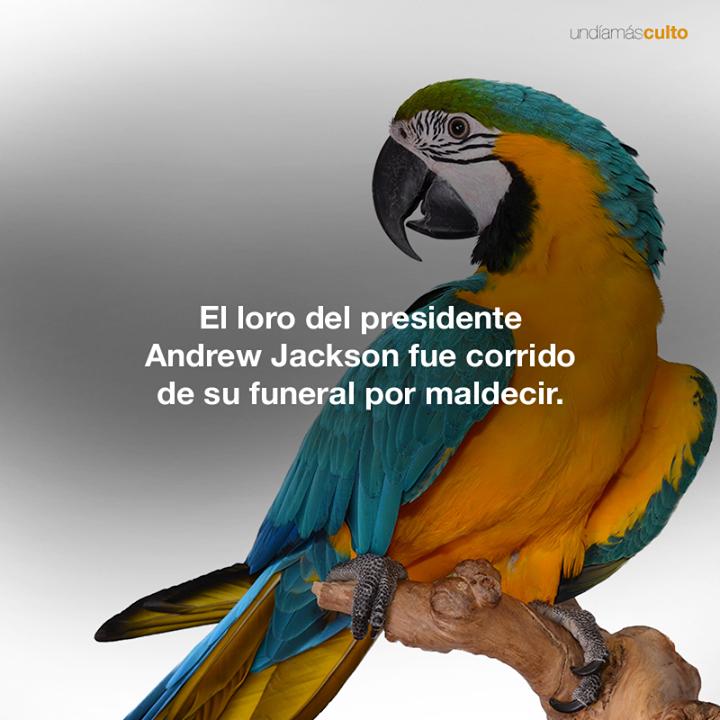 Loro de Andrew Jackson