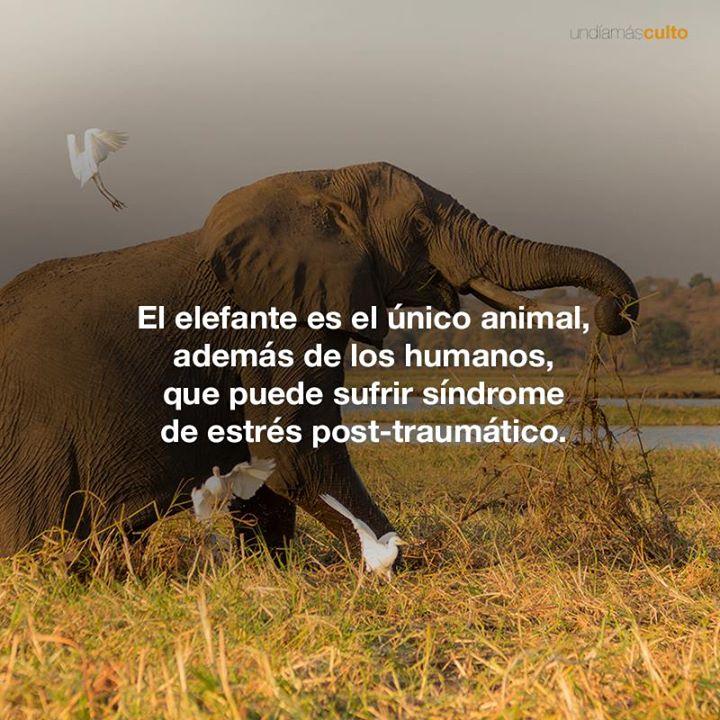 Elefantes y estrés