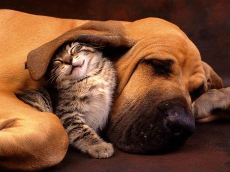 La oxitocina es la responsable del amor que existe entre tu mascota y tú