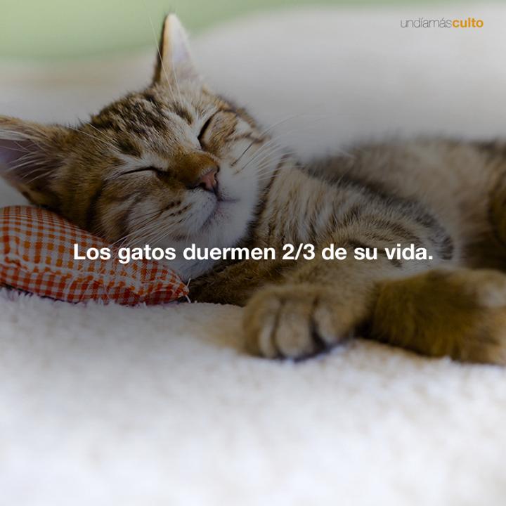 Los gatos duermen 2/3 de su vida