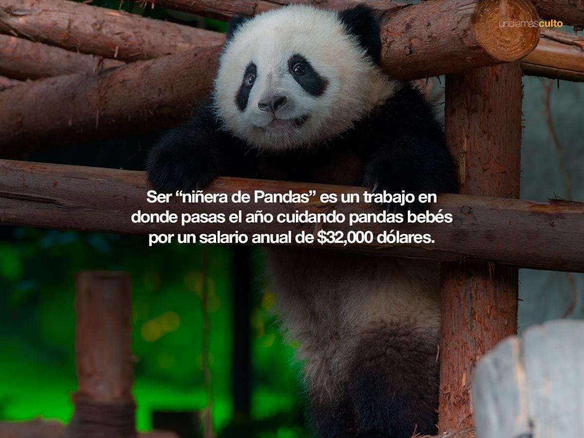 Niñera de pandas