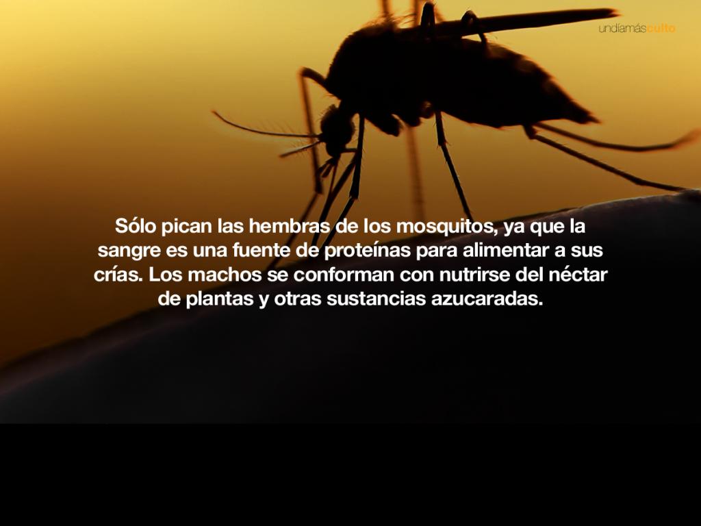 Sólo pican las hembras de los mosquitos