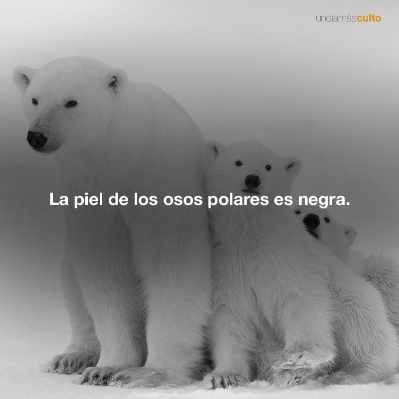Piel de los osos polares