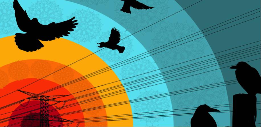 Aves de alto voltaje