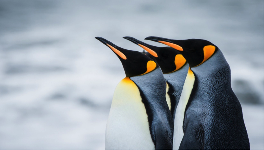 Pingüinos, tan tiernos pero bien depravados