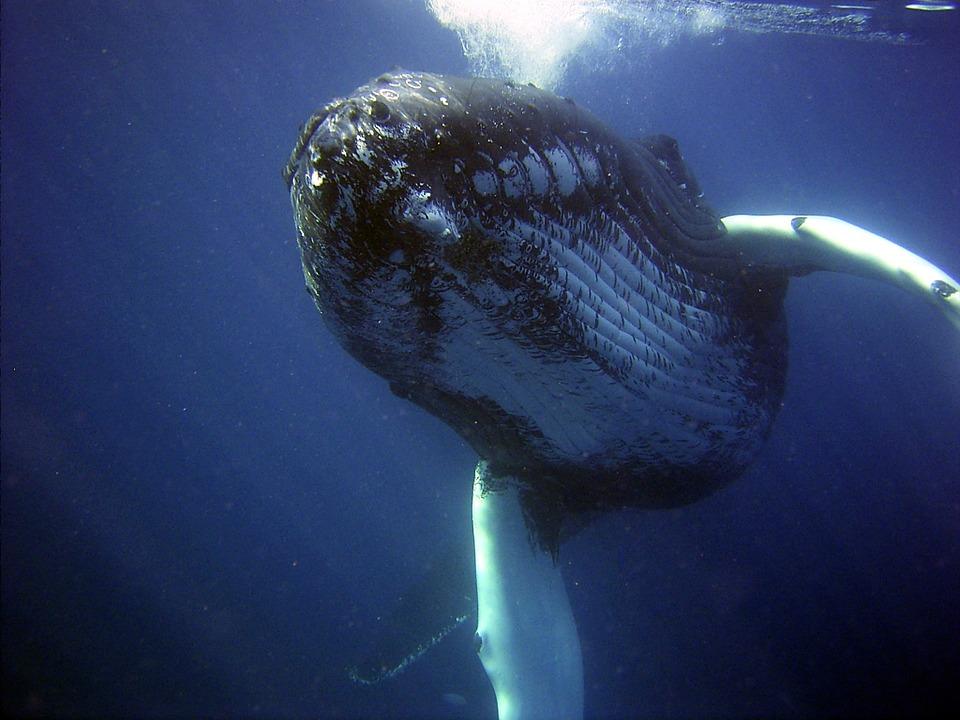 El diminuto origen de las ballenas