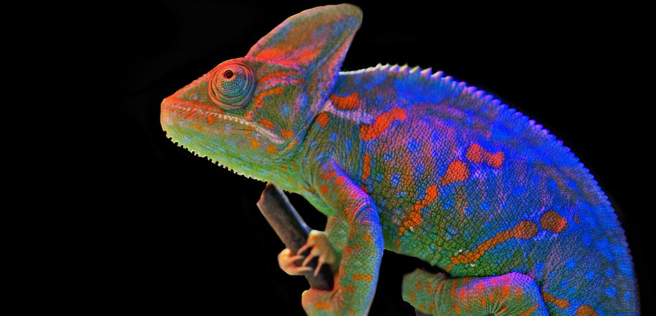 El color del camaleón