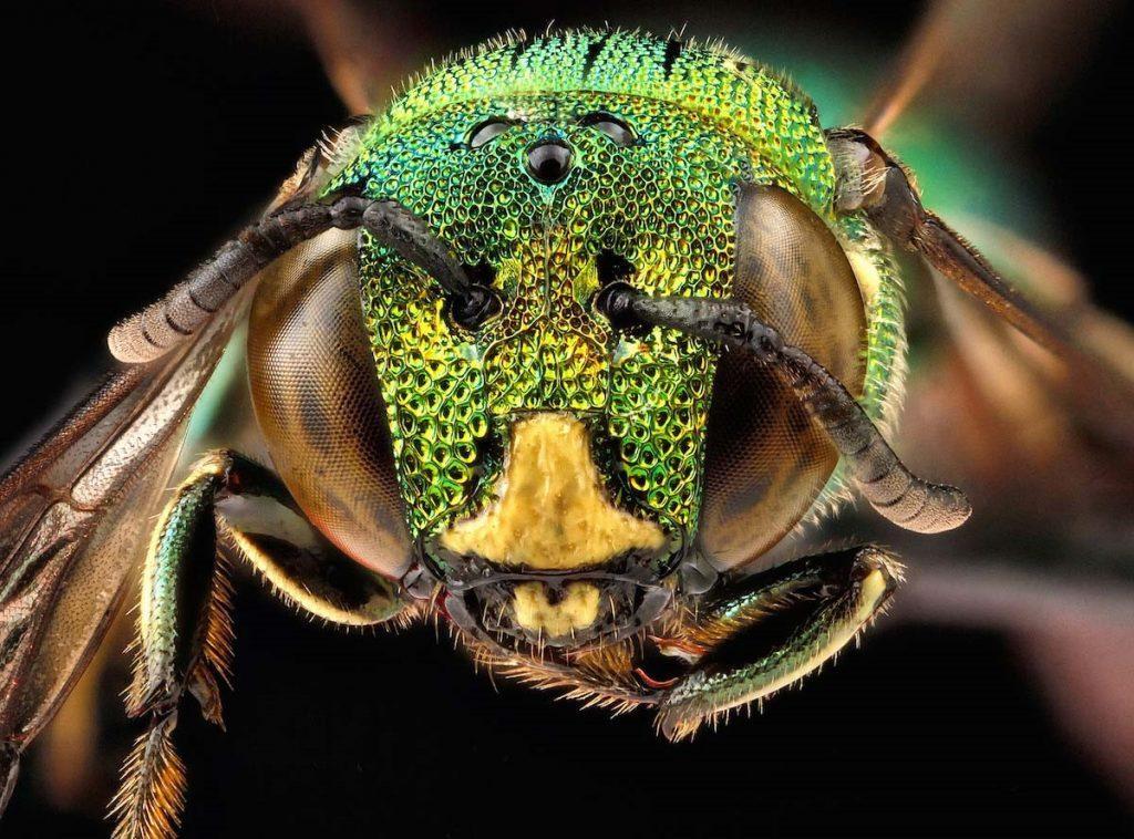 Sin abejas no hay vida