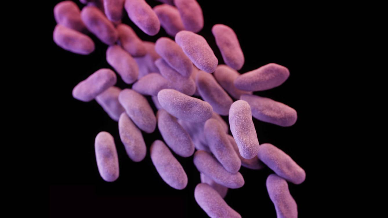 las-doce-bacterias-mas-peligrosas-y-nos-estamos-quedando-sin-cura