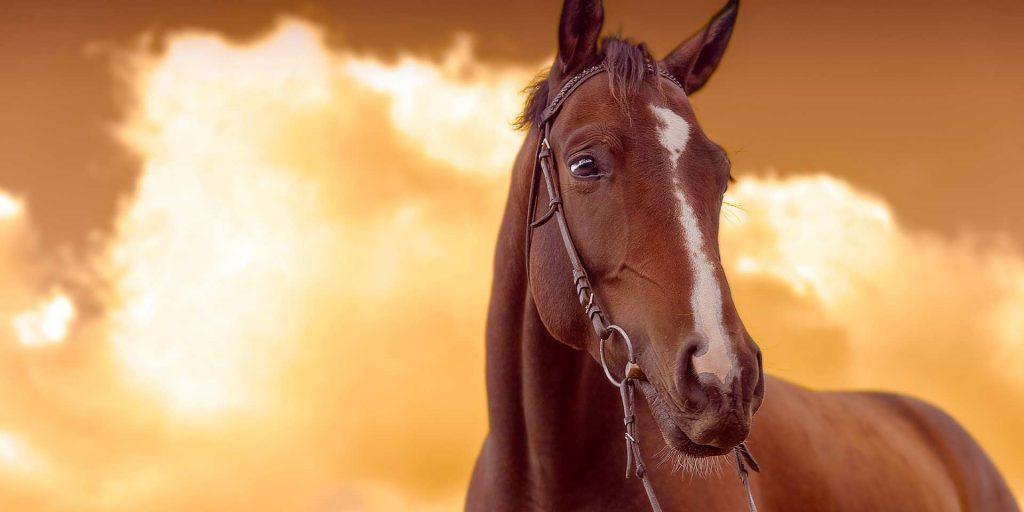 Los caballos más famosos de la historia