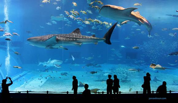 acuario-okinawa-churaumi