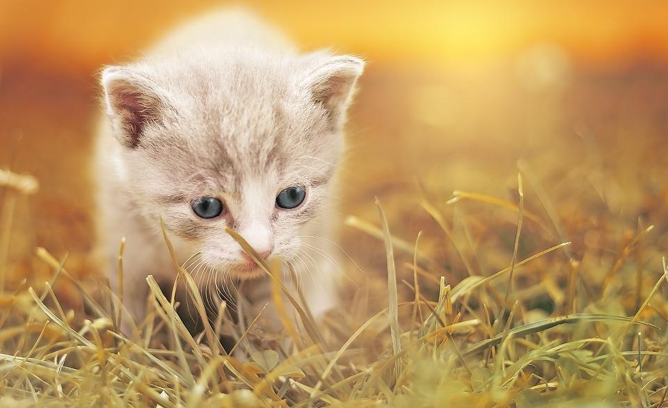 ¿Cómo es que los gatos hubieran evitado la muertes durante la Peste Negra?