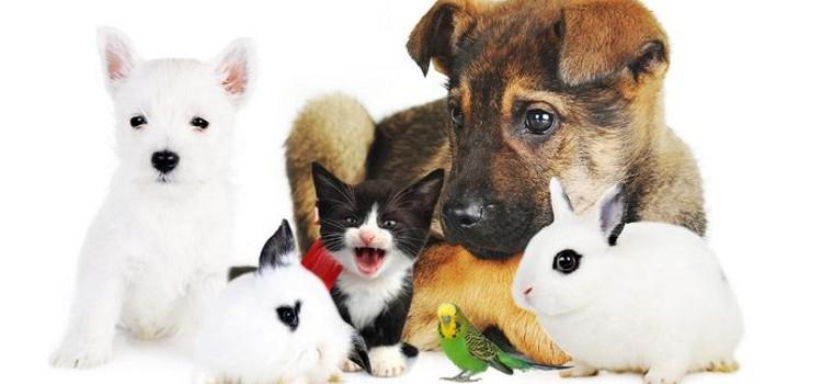 Los beneficios terapéuticos de tener una mascota