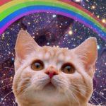 Catnip: Gatos en drogas