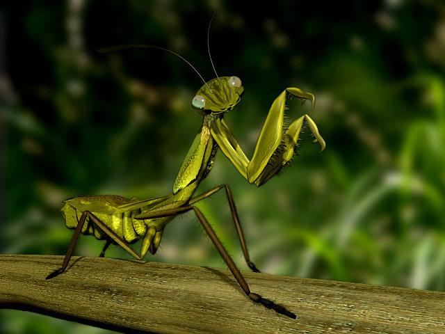 ¿Los insectos duermen?