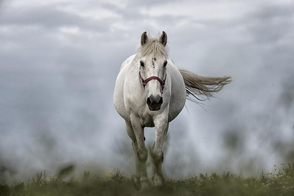 Los caballos voladores son los predecesores del cine