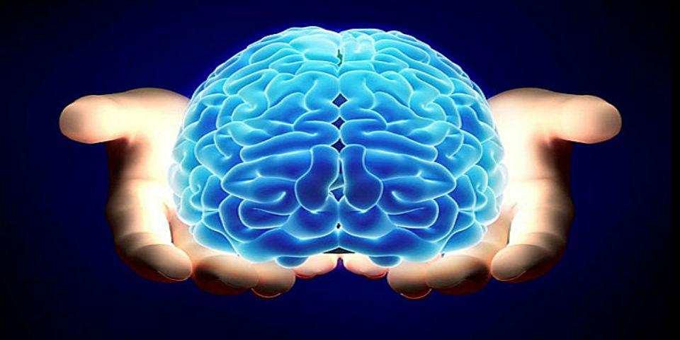 Nuestro cerebro está hecho de partes recicladas