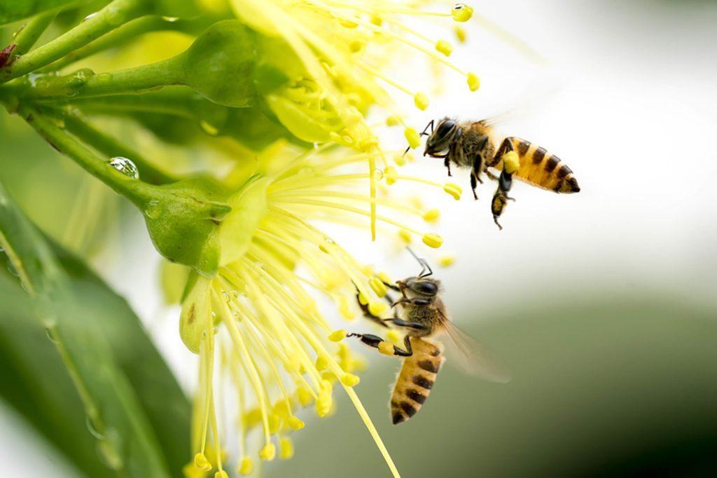El fundamental papel de las abejas para nuestras vidas