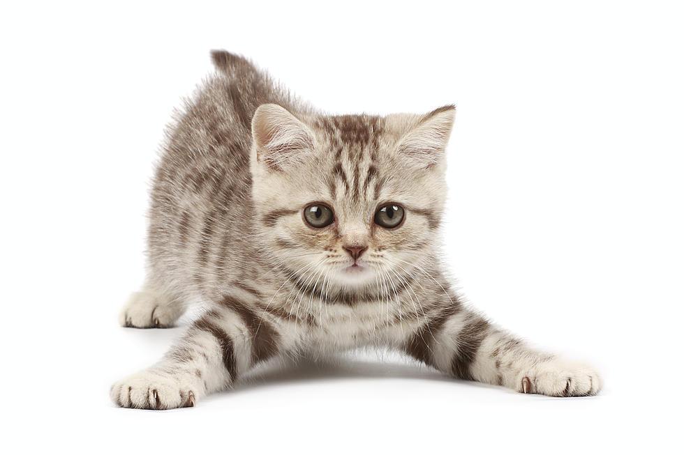 ¿Te gustan los gatos?