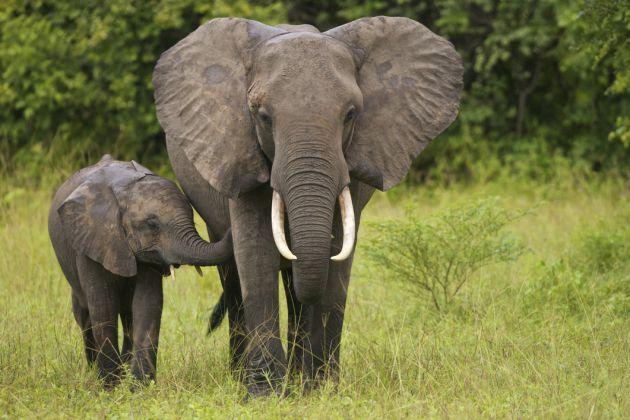 La tristeza de los elefantes