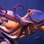 Cefalópodos sorprendentes