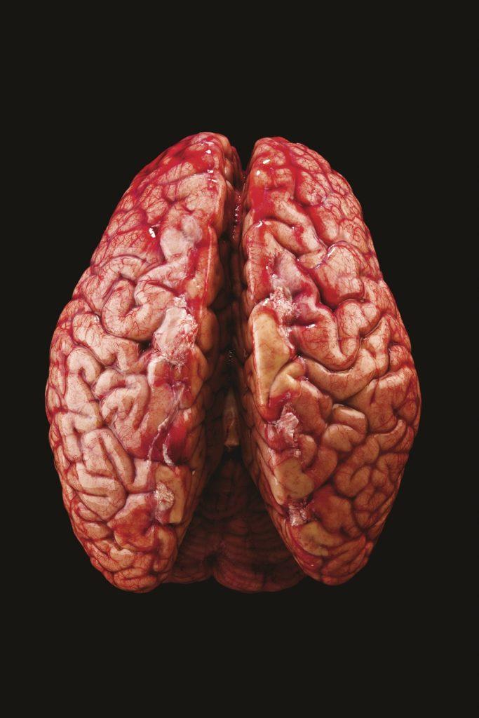 El panteón de los cerebros