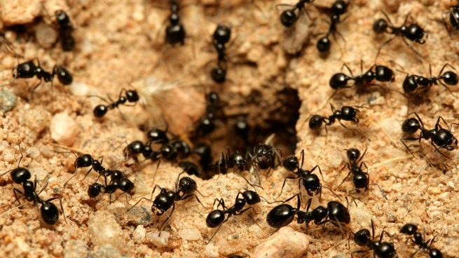 Hormigas entre el orden y el caos